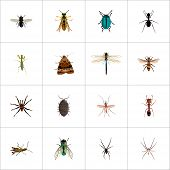Set Of Insect Realistic Symbols With Spider, Mantis, Sting And Other Icons For Your Web Mobile App L poster