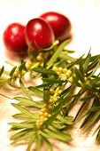Cranberry And Pine
