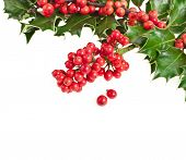 border of christmas garland holly Ilex isolated on white
