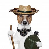 stock photo of canteen  - hike compass hat dog with canteen bottle - JPG