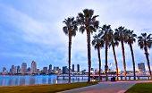 California Palm Trees and Downtown San Diego, Coronado Island Near the Ferry Landing, San Diego, Cal