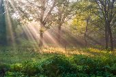 picture of oasis  - The bright sun rays shining through branches of trees wood landscape - JPG