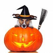 Halloween Kürbis Hexe Hund