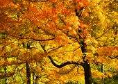 Bright Fall Foliage