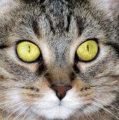 Cat face (close up)
