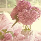 stock photo of hydrangea  - Hydrangea bouquet in the soft window light with a soft shabby chic texture - JPG