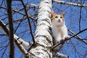 Cat On Tree
