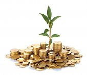 stock photo of coin bank  - plant growing out of gold coins isolated on white - JPG