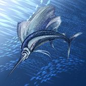 picture of sailfish  - The sailfish hunting in the deep sea - JPG