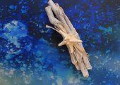 Starfish and driftwood on blue splash