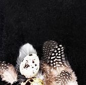 Quail Eggs With White Feathers On Vintage Black Scratched Background With Copy Space. Easter Decorat
