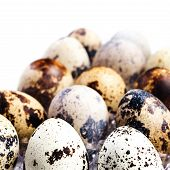 Group Of Quail Eggs In A Plastic Container, Isolated On White Background, Close Up.