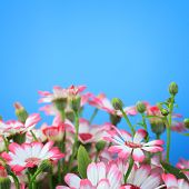 Flowers On A Blue Background