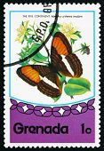 Postage Stamp Grenada 1975 Smooth-banded Sister, Butterfly