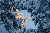 stock photo of laplander  - beautiful Lapland winter forest with  - JPG