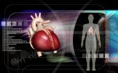 Human body and heart