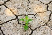 Green Tree Growing Through Dry Cracked Soil