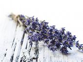 bunch of lavender flower on the white table