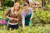 Garden center worker give advice to customer woman about plant