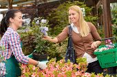 Garden center worker selling potted flower to customer buying plants