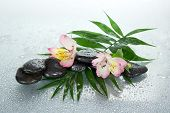 Wet stones and alstroemeria flower