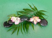 Wet stones and alstroemeria flower on howea leaf