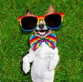 foto of homosexual  - super funny face gay dog lying on back on green grass and laughing out loud - JPG