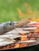 Fresh sardines on garden grill