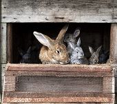 pic of rabbit hutch  - Mother rabbit with newborn bunnies in cage - JPG
