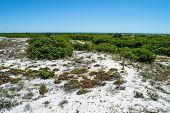 Native Vegetation Long Beach Island