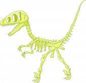 picture of dinosaur skeleton  - illustration of Dinosaur skeleton isolated on white - JPG