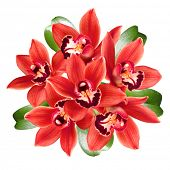 red orchids bouquet isolated on white