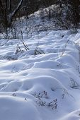 Snowdrifts In Winter Forest After Snowfall