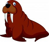 picture of blubber  - Vector illustration of Cartoon walrus isolated on white - JPG