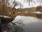 Van Cortlandt Park In Winter
