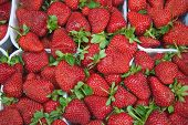 Strawberries In Tuscany