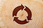 Close-up wooden cut and brown recycle symbol
