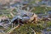 Toad Closeup
