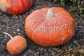 Herzlich Willkommen, Cucurbita Pumpkin Pumpkins From Autumn Harvest On A Market