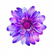 picture of mona lisa  - Bright Purple pink Mona Lisa flower - JPG