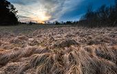 picture of grassland  - Beautiful landscape of withered grassland near forest at sunset - JPG