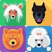 image of poodle  - Vector dog Poodle - JPG