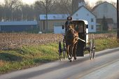 Caballo Amish y buggy, Condado de Chester, Pennsylvania Dutch Country