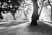 dappled morning sunlight coming through the trees of park, black and white