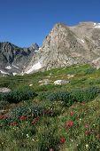 Indian Peaks Wildflowers