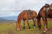 Horses On Easter Island