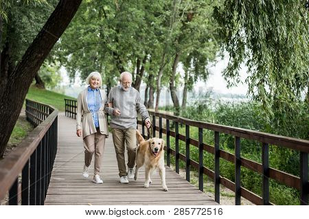 poster of Happy Senior Couple Walking With Adorable Dog In Park
