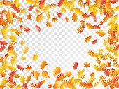 Oak, Maple, Wild Ash Rowan Leaves Vector, Autumn Foliage On Transparent Background. Red Orange Yello poster