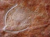 Cantera Fossil