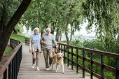 Happy Senior Couple Walking With Adorable Dog In Park poster